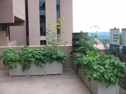 National Center for Atmospheric Research Ozone Garden
